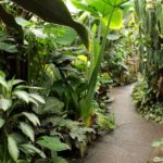 Plants in the Living Rainforest glasshouses