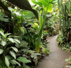 Plants in the Living Rainforest glasshouses