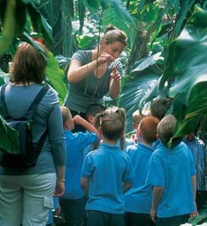 A tour guide shows a group of school children around the Living Rainforest glasshouses