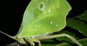 insect mimicry