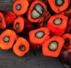 palm oil fruits cut