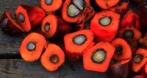 palm oil fruits cut