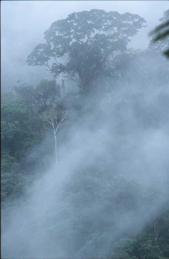 primary lowland rainforest Amazon Basin Manu Peru DavidTipli tif