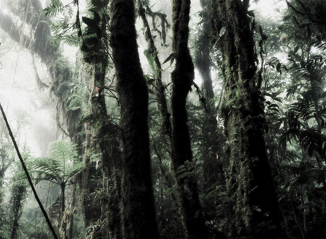 rain forest 266863 1280