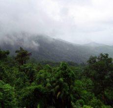 rainforest 384940 1920