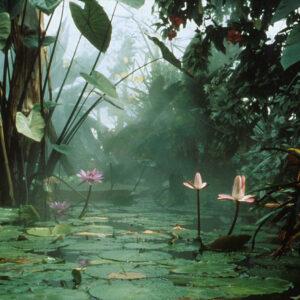 pond 6x4 300dpi